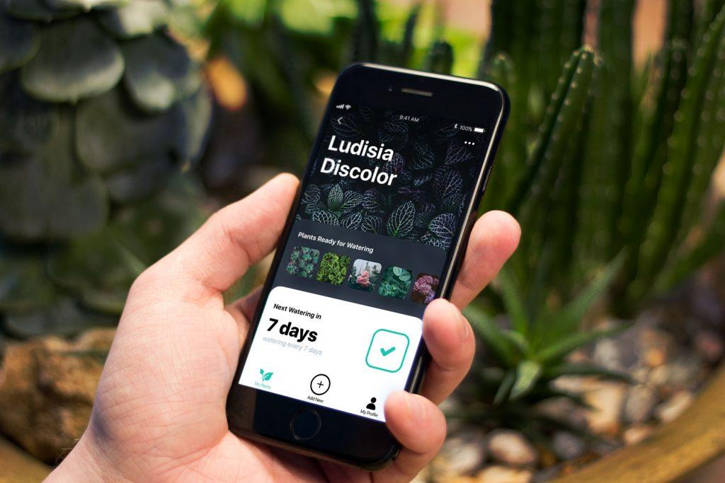 watering tracker app design tubik