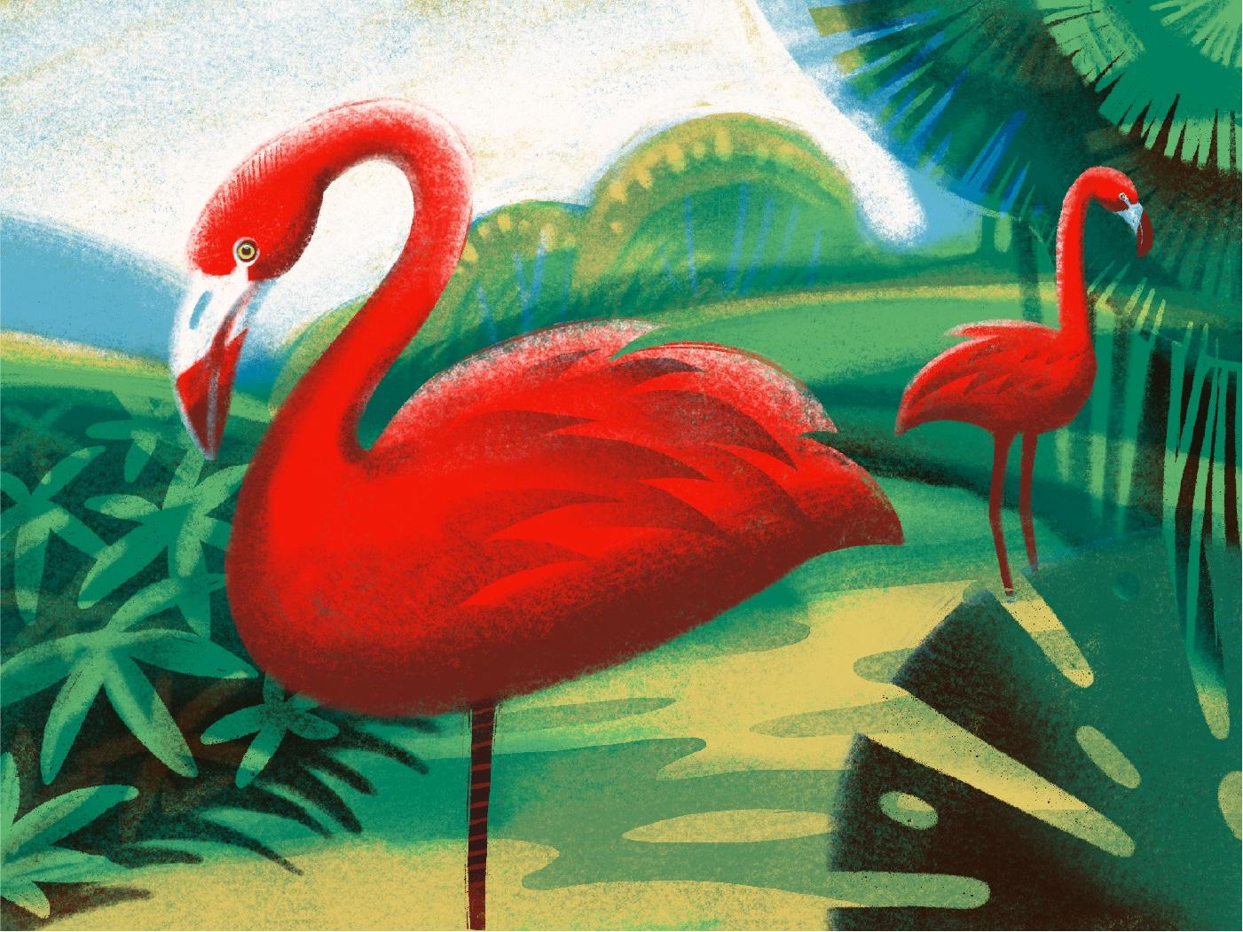 flamingos animal illustration